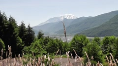 Grasses Blowing In Foreground In Front Of Mt. St. Helens Stock Footage