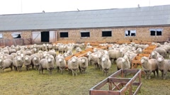 Sheep,corral, farm, Stock Footage
