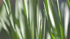 Green grass shallow depth of field  outdoor 4K 2160p UltraHD footage - Natura - stock footage