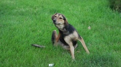 Shot of a stray dog - stock footage