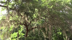 Lush and Beautiful Epic Tree Stock Footage
