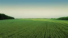 Fast Flying Over Green Field Stock Footage