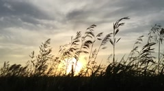 240FPS SLO MO - Grass silhouette sunset blowing in wind Stock Footage