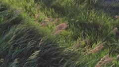 240FPS SLO MO - Grass at sunset blowing in wind with light streaks - stock footage