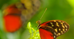 4K Red and Black Butterfly, Two Butterflies Stock Footage