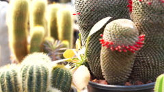 The Garden of Cactus & Succulent plants Stock Footage