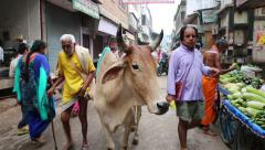 Cow, Indian sacred animal, standing in the midst of the crowd in the city center Stock Footage