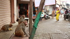 India. Monkey on a city street to steal items from street vendors. - stock footage