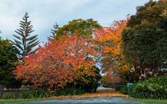 Autumn Trees Driveway - stock photo