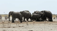 Crowded waterhole with Elephants, zebras, springbok and orix Stock Footage