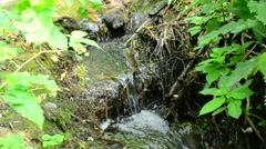 Beautiful brook with small waterfalls flowing in a forest Stock Footage