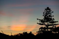 Colorful sunset clouds and tree silhouettes Stock Photos
