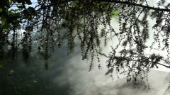 Smoke in the forrest brunches Stock Footage