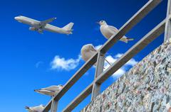 Gulls, blue sky, airplane - stock photo