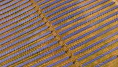 Aerial View Of Solar Panels Field Reflecting Sun Rays Clean Renewable Energy Stock Footage