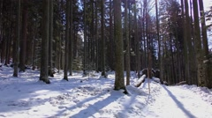 4K footage of the Bavarian Forest National Park in Bavaria, Germany - stock footage