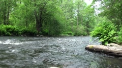 Russia, Saint-Petersburg, Petajarvi - Wolf River, Nature, Forest 2 Stock Footage