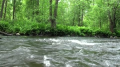 Russia, Saint-Petersburg, Petajarvi - Wolf River, Nature, Forest 4 Stock Footage