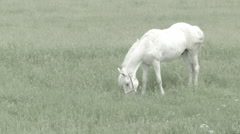White horse on grass -Cine Gamma- - stock footage