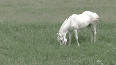 White horse on grass -Graded- Stock Footage
