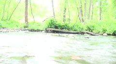 Russia, Saint-Petersburg, Petajarvi - Wolf River, Nature, Forest 16 Stock Footage