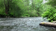 Russia, Saint-Petersburg, Petajarvi - Wolf River, Nature, Forest 8 Stock Footage