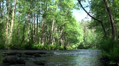 Russia, Saint-Petersburg, Petajarvi - Wolf River, Nature, Forest 12 - stock footage