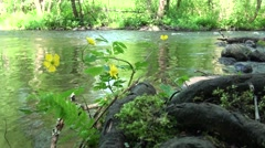 Russia, Saint-Petersburg, Petajarvi - Wolf River, Nature, Forest 11 - stock footage