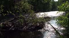 Russia, Saint-Petersburg, Petajarvi - Wolf River, Nature, Forest 19 Stock Footage