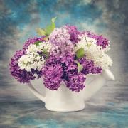 Spring concept. Lilac in pitcher Vintage retro hipster style version Stock Photos