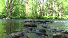 Russia, Saint-Petersburg, Petajarvi - Wolf River, Nature, Forest 21 Stock Footage