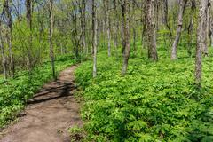 Lush Forest along Appalachian Trail Approach - stock photo