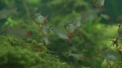 Colorful fish swimming in aquarium Stock Footage
