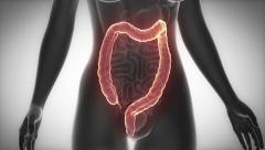 COLON female organ anatomy scan in loop Stock Footage