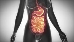GUTS female organ anatomy scan in loop Stock Footage