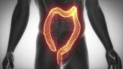 COLON male anatomy organ scan in loop - stock footage