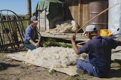 Mongolians produce felt in Harhorin, Mongolia. - stock photo