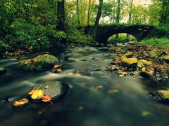 Old stony bridge above autumn river. Water of stream full of colorful leaves Stock Photos