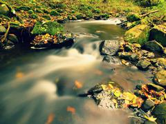 Gravel in water of mountain river covered by colorful aspen and beech leaves. Stock Photos