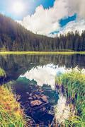 Summer mountain lake forrest - stock photo
