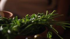 Herbs on the Dinner Table, Biblical Reenactment - stock footage