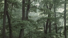 Forest / Woods in Romania 1 -Graded- Stock Footage