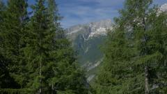 Aerial - Between the trees revealing the Alps Stock Footage
