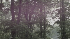 Forest / Woods in Romania 2 -Cine Gamma- Stock Footage