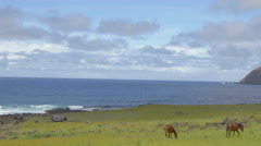 Three horses grazing near the coast of Easter Island, Chile Stock Footage