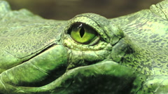 The eye of a green reptile; crocodile Stock Footage