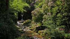 Idyllic forest scenery with creek and cascades #2 Stock Footage