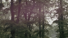 Forest / Woods in Romania 2 -Graded- Stock Footage