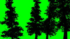 Trees silhouette in the breeze green screen Stock Footage