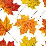 Maple-leaf seamless background Stock Photos